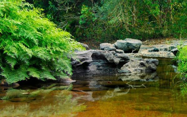 منطقه حفاظت شده پو دائن دین