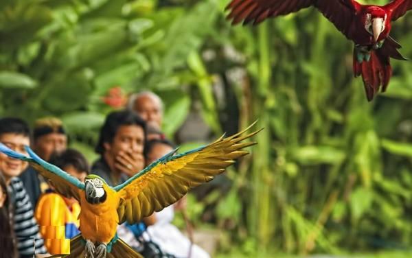 پارک پرندگان بالی | Bali Bird Park