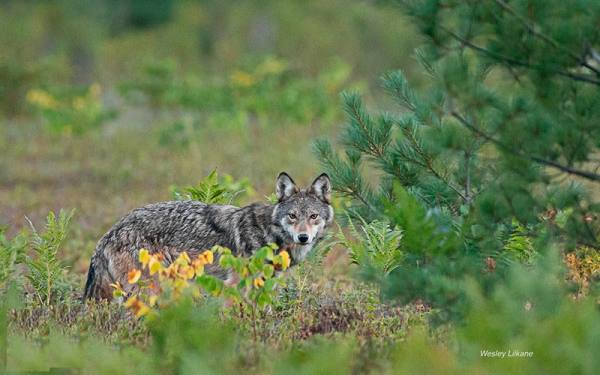 پارک ایالتی الگانکین   Algonquin Provincial Park