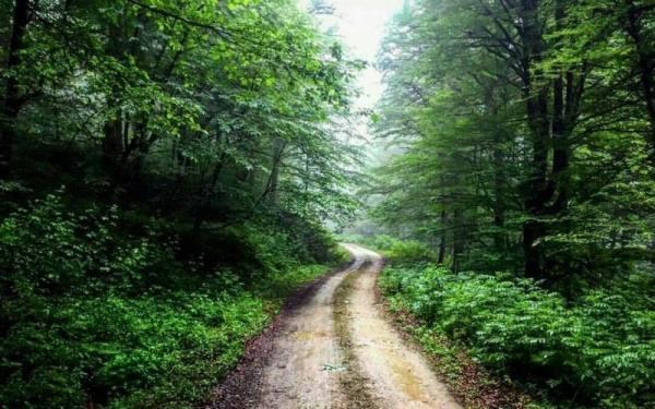 طبیعت چالوس | جاده چالوس