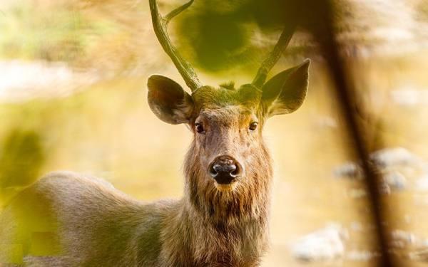 پارک ملی رانتامبور هند