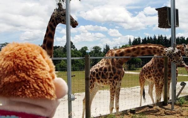 باغ وحش هامیلتون | Hamilton Zoo