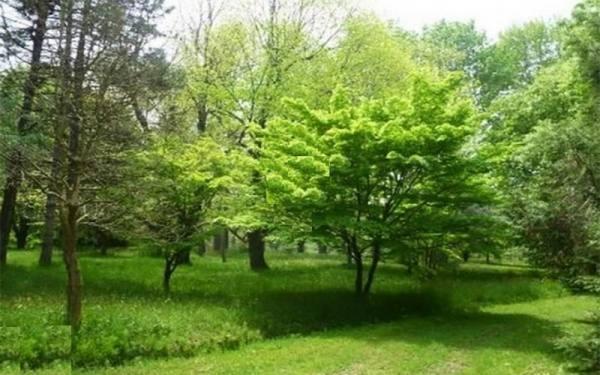 باغ گیاه شناسی نوشهر