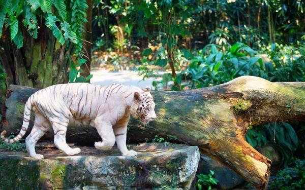 حیات وحش در سنگاپور