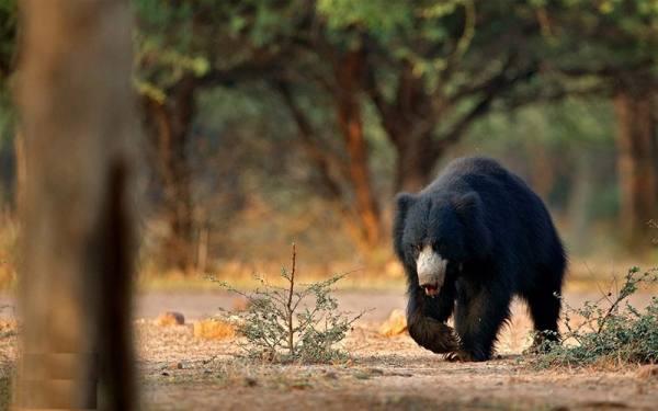 حیات وحش هند