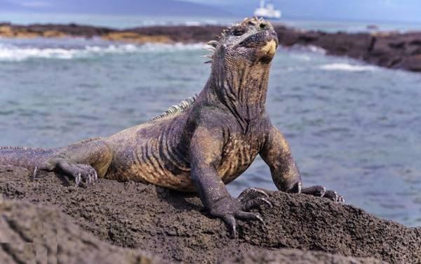 جزایر گالاپاگوس | Galapagos Islands