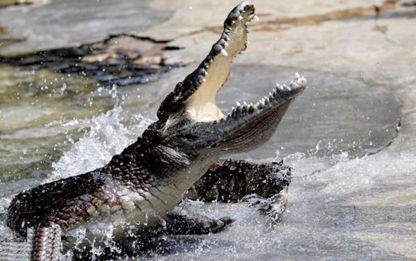 پارک کروکودیل ها | Guangzhou Crocodile Park