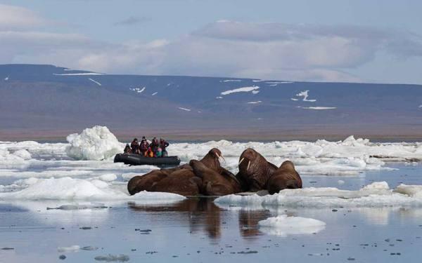 جزیره ی رنگل در ایسلند