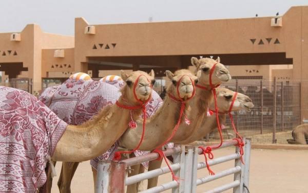 جاذبه های گردشگری امارات