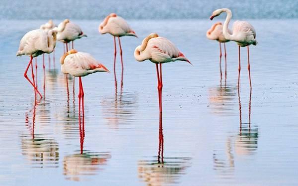 پارک ملی دریاچه ارومیه
