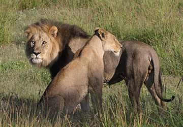 The Wilds of Botswana