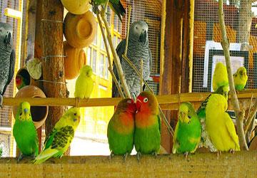 Birds Garden in Tehran