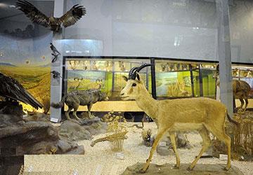 Pardisan Biodiversity Museum