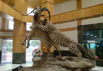 Iran Wildlife and Nature Museum