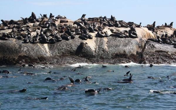 جزیره شیرهای دریایی | Seal Island