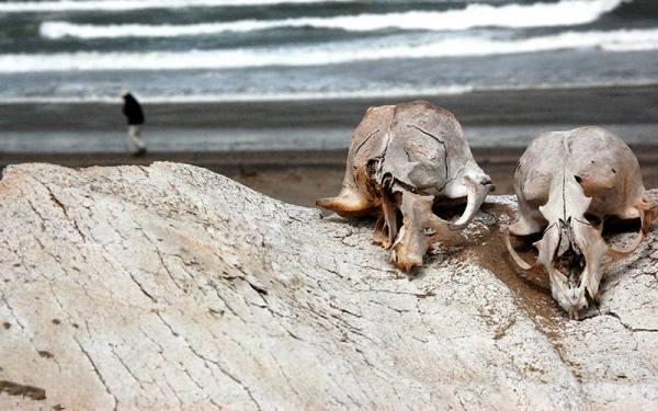 ساحل اسکلت نامیبیا