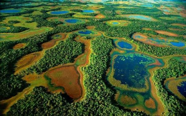 اورگلیدز، آمریکا | Everglades, USA