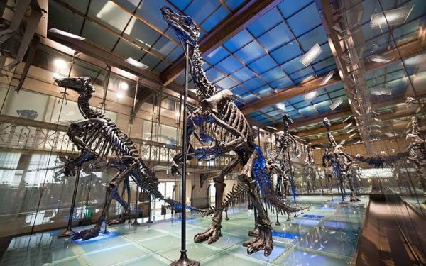 موزه علوم طبیعی