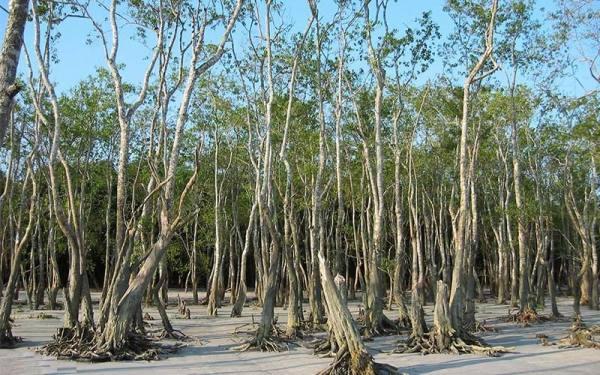 جنگل های سونداربانس | Sundarbans