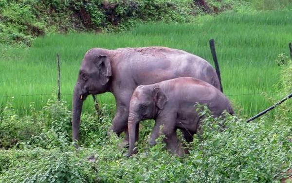 کمپ فیل های آبی